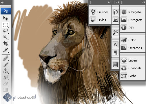 Lion Sketch